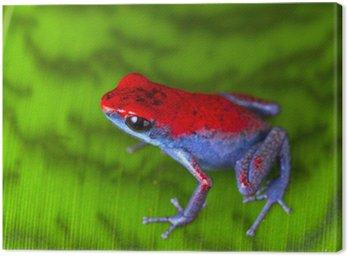 Obraz na Płótnie Strawberry Frog Poison