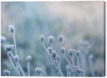 Obraz na Płótnie Streszczenie naturalne z zamrożonych roślin lub pokryte szronem rym