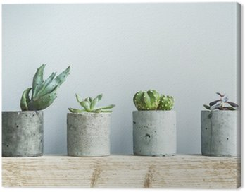 Obraz na Płótnie Sukulenty w diy puli betonu. Skandynawski pokój wystrój wnętrz