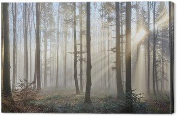 Obraz na Płótnie Sun promienie przez mglisty las