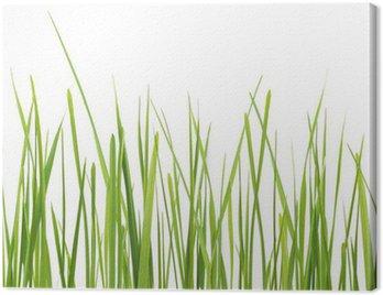 Świeża trawa