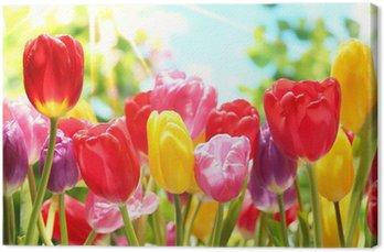 Obraz na Płótnie Świeże tulipany w ciepłe światło słoneczne