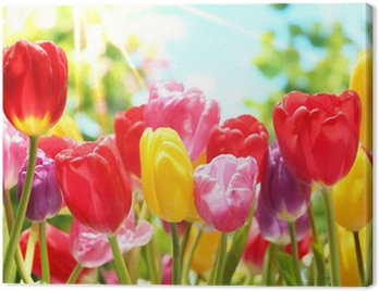Świeże tulipany w ciepłe światło słoneczne