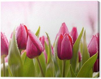 Świeże tulipany z kropli rosy