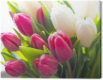 Obraz na Płótnie Świeże tulipany