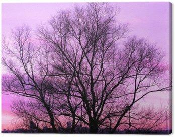 Obraz na Płótnie Sylwetka wielkiego starego drzewa na piękny zachód słońca fioletowym tle retro filtrowane
