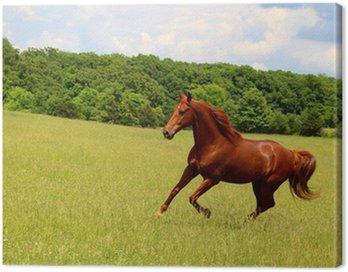 Szczaw konia uruchomiony w pastwisk letnich