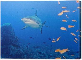 Obraz na Płótnie Szczęki rekina szare białe gotowe do ataku pod wodą