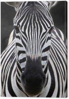 Obraz na Płótnie Szef zebra