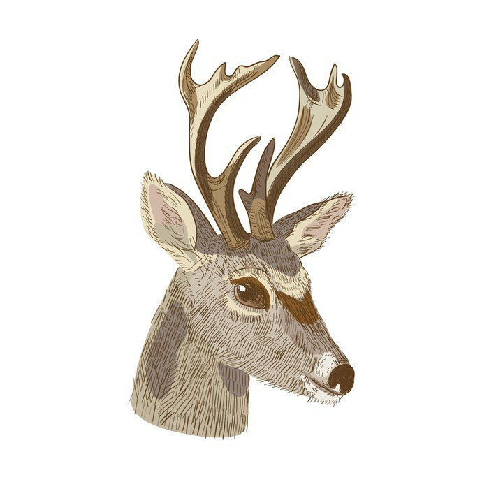 Obraz na Płótnie Szkic głowy jelenia - Ssaki
