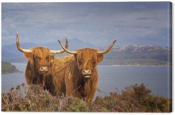 Obraz na Płótnie Szkocka krowa iv