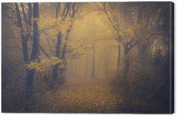 Tajemniczy mglisty las z bajki wygląd
