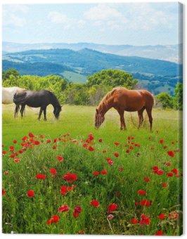 Obraz na Płótnie Tam trawa wypas koni