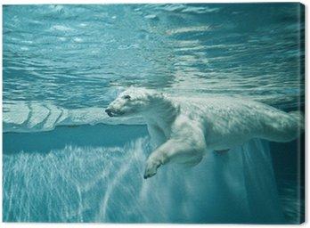 Obraz na Płótnie Thalarctos morza (ursus maritimus) - niedźwiedź polarny