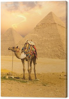 Tied Camel Stały Pyramids front V