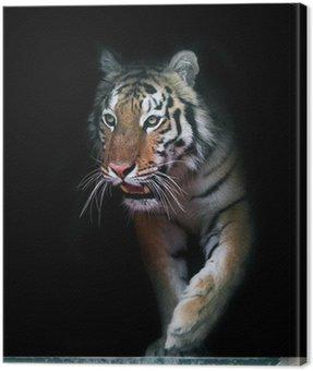 Obraz na Płótnie Tiger wychodzi