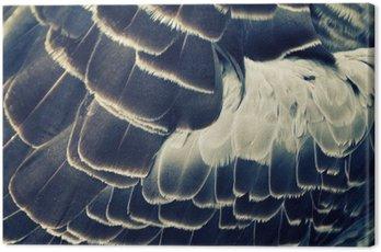 Obraz na Płótnie Tło upierzenie ptaka