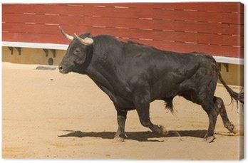 Toro de Lidia hiszpański