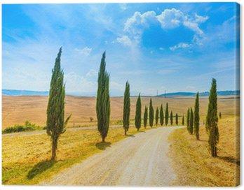 Obraz na Płótnie Toskania, Cyprysy white road krajobrazu wiejskiego, Włochy, Europa