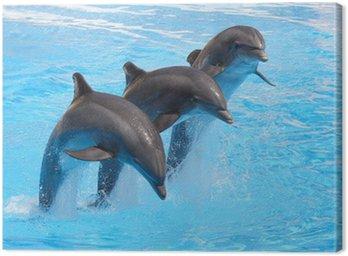 Trio z delfinami
