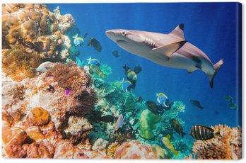 Obraz na Płótnie Tropikalna rafa koralowa.
