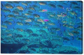 Tropikalna ryba w akwarium na rafie koralowej