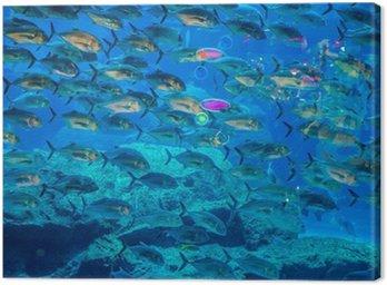 Obraz na Płótnie Tropikalna ryba w akwarium na rafie koralowej