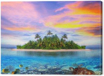 Obraz na Płótnie Tropikalna wyspa Malediwów z życia morskiego