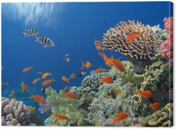 Obraz na Płótnie Tropikalnych ryb na rafy koralowej w Morze Czerwone