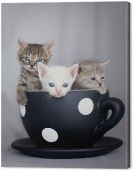 Obraz na Płótnie Trzy kociaki siedzi w dużym kubku