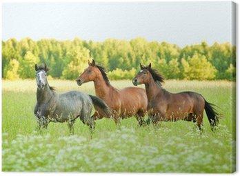 Obraz na Płótnie Trzy koni z systemem kłus w dziedzinie kwiat w lecie