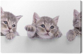 Trzy szkockie kotek