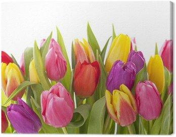 Tulipan kwiaty