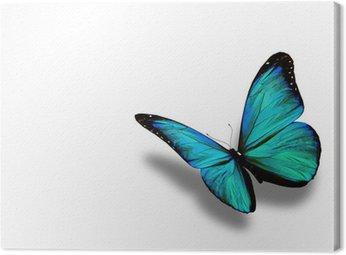 Turkusowy motyl, na białym tle
