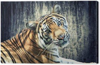 Obraz na Płótnie Tygrys przed grunge ścianie
