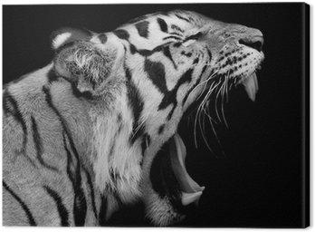 Obraz na Płótnie Tygrys sumatrzański ryk