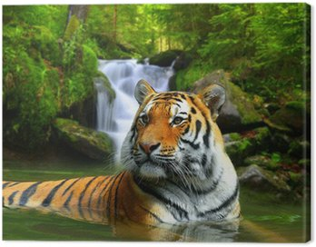 Obraz na Płótnie Tygrys syberyjski w wodzie
