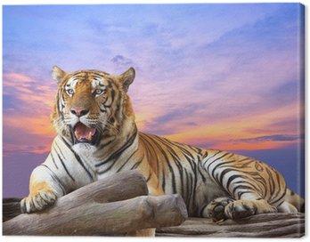 Obraz na Płótnie Tygrys szuka coś na skale z piękne niebo o zachodzie słońca