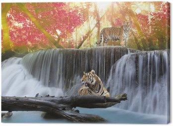 Obraz na Płótnie Tygrys w Waterwall