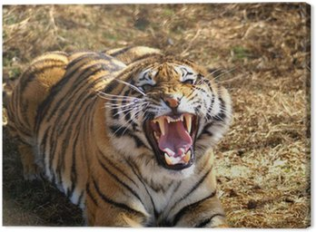 Obraz na Płótnie Tygrys