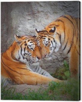 Obraz na Płótnie Tygrysie para. Miłość w przyrodzie.