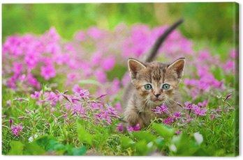 Urocza pręgowany kot w kwiatach