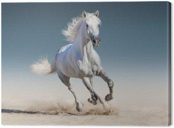 Obraz na Płótnie Uruchomić biały koń galop