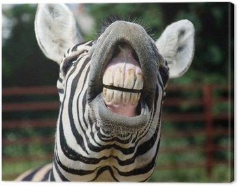Obraz na Płótnie Uśmiech i zęby zebra