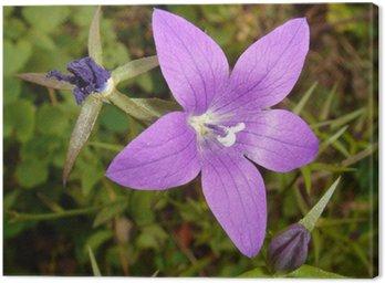 Obraz na Płótnie Violetta