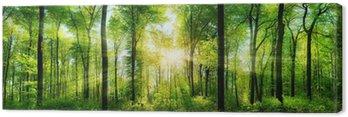 Obraz na Płótnie Wald Panorama mit Sonnenstrahlen