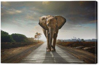Obraz na Płótnie Walking słonia