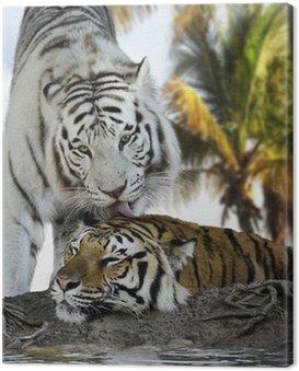 Obraz na Płótnie White And Brown Tigers
