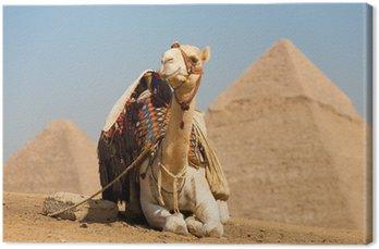 White Camel Odpoczynku Piramidy Cheopsa