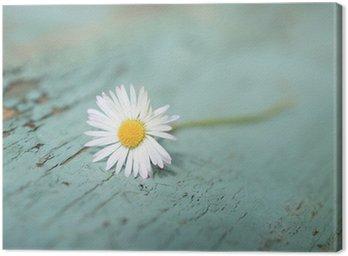 Obraz na Płótnie White Daisy bliska